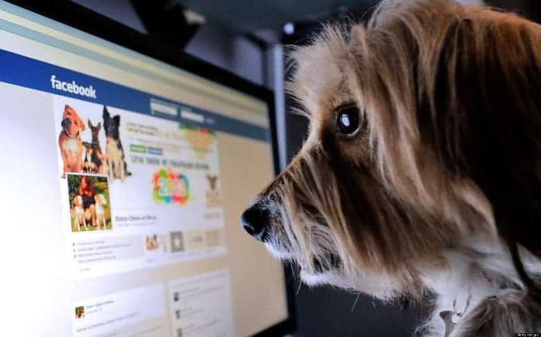 9 tipi di utenti facebook