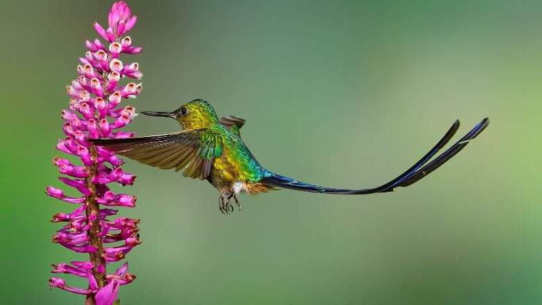 Google Humminggbird