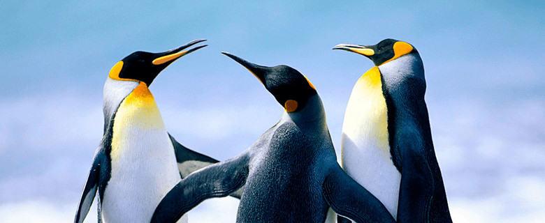 capire google penguin per uscire da penalizzazione