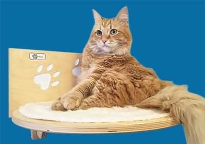 vendere su facebook con i gattini
